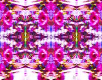 hibiscuse flower illustration