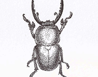 Stippling - Beetle
