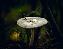 Parmis les Champignons / Among Mushrooms