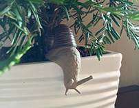 Pottery Snail