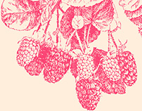 Raspberry Silkscreen