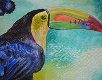 Tucan - Acuarela (Toucan-watercolor)