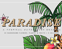 Paradise Watercolor Illustrations