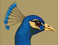 Peafowl (T- Shirt Design)