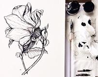 Botanical illustration by ink