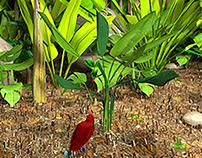 L'oiseau de paradis