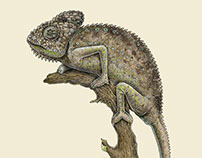 The Warty Chameleon