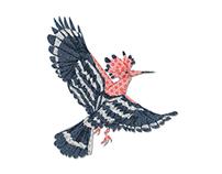 Washi Birds