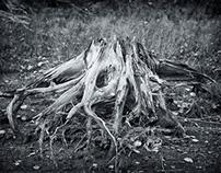 Das Tal der toten Bäume