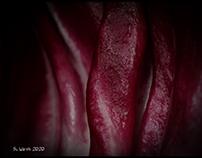 Radicchio Rosso di Chioggia