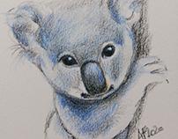 Small koala drawing