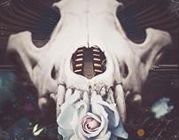 :Skull