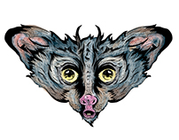 Hybrid aye aye illustration