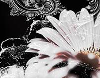 Beauty - Black and White II