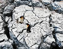 Glacier (loess) Penguin