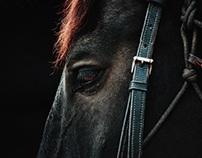 APD Horses