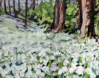 Snowdrop Bank by Tracy Butler