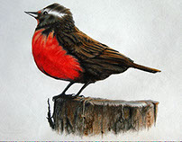 Patagonian Wildlife Colored Sketches