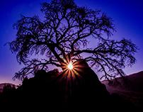Joshua Tree National Park Sunrise