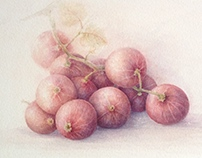 Gooseberry... Watercolor...