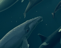 Whales Set