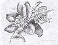 Fleurs au crayon noir