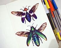 Ballpoint Beetles