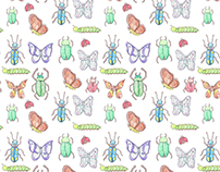 Beetles & Butterflies