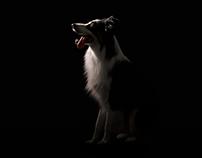 Perros Invisibles