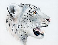 Watercolor painting of a snow leopard