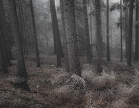 In the Fog III