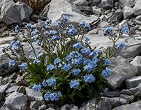 piccole meraviglie blu