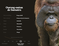 Projets WWF