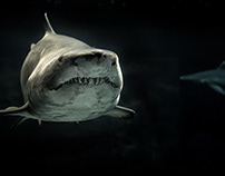 The Top 10 Best Shark Movies of All Time