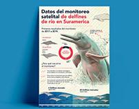 Infografía Delfines de río