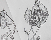 Moth Illustrations