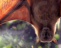 Flying Fox Bat | Stuart Jackson-Carter