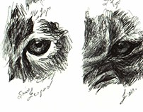 Sketch time - 10 animal eyes