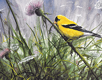 Paintings of Birds