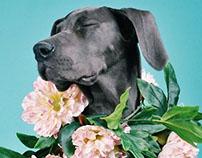 DIGITAL PAINTING DOGGY DOG !