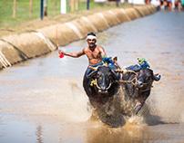 Lets Race, Kambala The Buffalo (He) Race