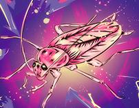 Pink Roach