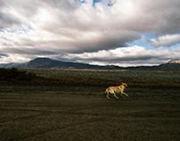 Mar de perros que ladran desiertos