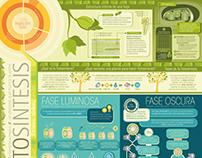 Infografía - Fotosíntesis