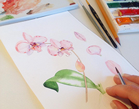 Pink Phalaenopsis with watercolor