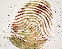 Bagdat Spice - Fingerprint