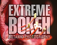 Amaryllis - Extreme Bokeh