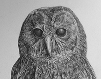 Rough Pencil Study of a Tawny Owl