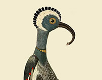 Infertile Birds: Genus Elephpadus (collage)
