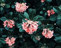 Flowers Pt. I
